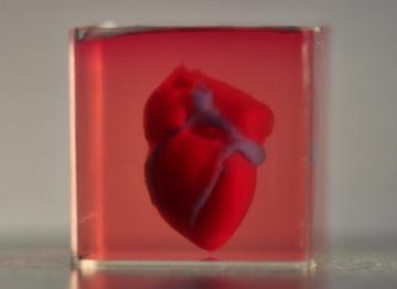 In 3D thành công quả tim dùng chính tế bào của bệnh nhân